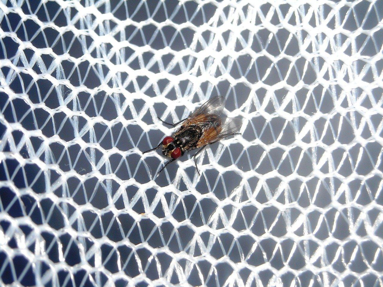 domondo moskitiery