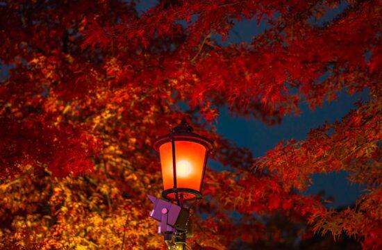 Designerskie dodatki do domu w kolorach jesieni